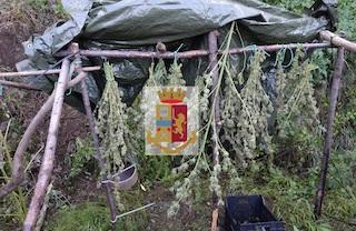 """Coltivava cannabis accanto alla """"Sorrentina"""", arrestato – foto –"""