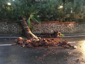 Cade una palma sulla strada, rischiata la tragedia nel centro di Sorrento – foto –