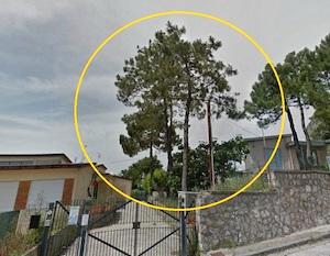 Alberi tagliati nella scuola di Piano di Sorrento. Protesta delle mamme e del Wwf