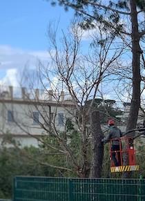 taglio-alberi-scuola-colli