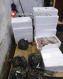 Cenone sicuro: Multe, sequestri e denunce della Capitaneria nell'area stabiese e sorrentina – foto –