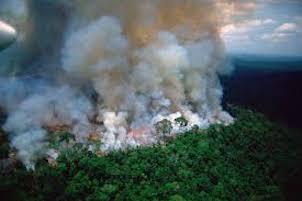 Il Consiglio comunale di Sorrento approva all'unanimità un atto a favore della foresta amazzonica