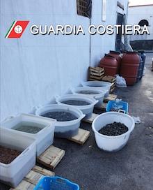 La Capitaneria stabiese sequestra una tonnellata e mezza di prodotti ittici non tracciati