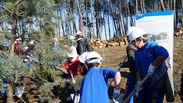 Piantati alla pineta Le Tore di Sorrento i primi alberi donati da Terna – foto –
