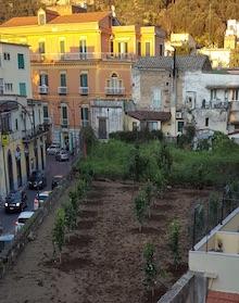 Niente box, tornano gli alberi nel fondo del corso Italia di Meta