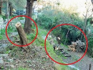 Taglio di alberi in una zona a rischio frana tra Sant'Agnello e Sorrento, denuncia Wwf