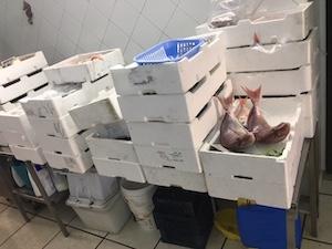 Un quintale di prodotti ittici sequestrato dalla Capitaneria stabiese