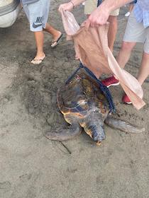Corsa contro il tempo per salvare tartaruga ferita a Sorrento