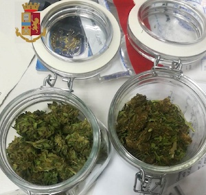 Marijuana nei barattoli in casa, arrestato a Massa Lubrense – foto –