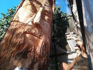 Il Pino Sentinella tra le due costiere diventa una scultura