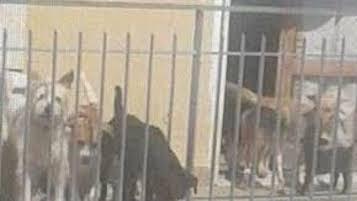 Manifestarono per liberare 23 cani da una casa di Sant'Agnello, chiesto rinvio a giudizio