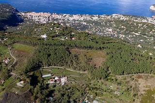 La pineta Le Tore di Sorrento chiusa da 4 anni con 1.300 alberi in attesa di essere piantati – foto –