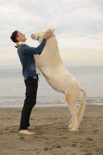 I cavalli di Francesco Paolo Esposito dalle stalle della costiera ai set di Hollywood
