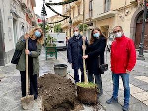 Giornata degli alberi, un nuovo arancio piantato al corso Italia di Sorrento