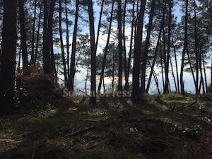 alberi-abbattuti-tore