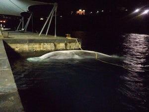 balena-morta-sorrento