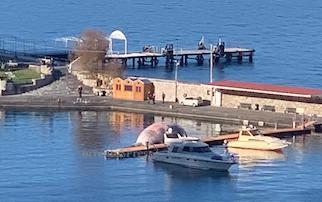 Sarà esposto al porto di Sorrento lo scheletro della balena