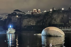 Anche l'ultimo viaggio della balena di Sorrento è un'odissea