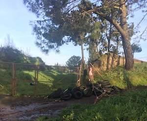 Recuperati 24 pneumatici abbandonati alla pineta Le Tore di Sorrento – foto –