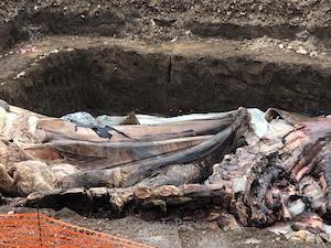 sepoltura-balena-1