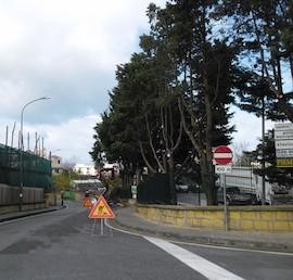 Eliminati gli alberi dell'isola ecologica di Piano di Sorrento, Wwf all'attacco