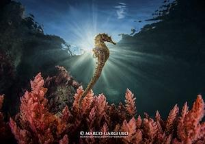 Amp Punta Campanella con una foto di Marco Gargiulo vince il concorso Obiettivo Mare