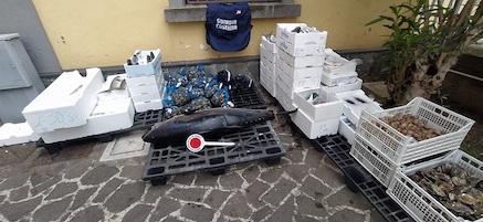 Pesci sotto misura e privi di tracciabilità, 600 kg sequestrati in costiera