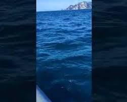 Un raro Pesce Luna nel mare di Punta Campanella – video –