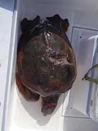 tartaruga-ferita-8821-2