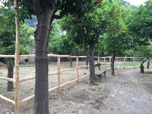A Sorrento un'area di sgambatura per cani